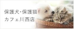 保護犬・保護猫カフェ川西店